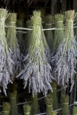 Long Barn Lavender, Alresford.